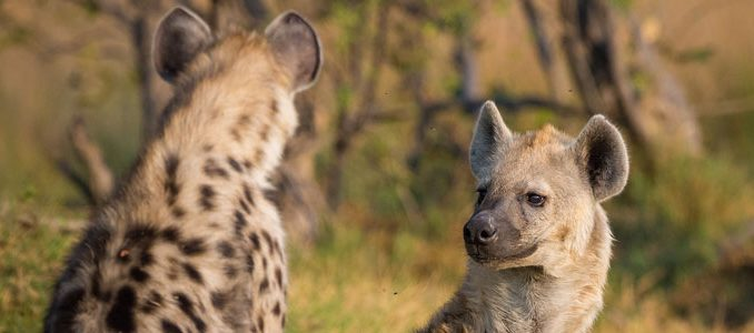 safaris photos privés