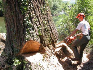 élagage et d'abattage d'arbre