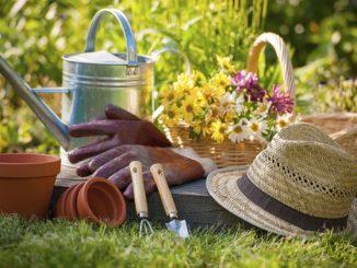 Commet éradiquer les insectes au autres nuisibles au sein d'une habitation
